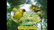 Madarak eneke - Птичи песни