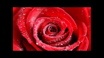 Романтични любовни песни - инструментали