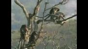 Смутени Маймуни По Време на Секс