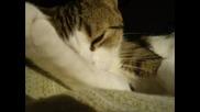 Една От Многото Красиви Котки