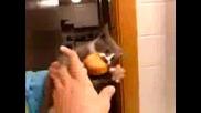 Не Ми Пипай Храната Бе !