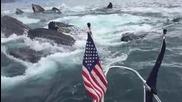 Хора заснемат чайките в залива, но зад лодката се появяват китове