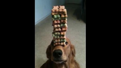 Куче играе Дженга