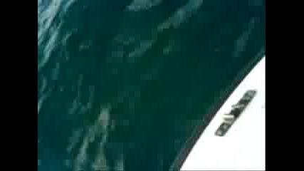 Делфини край Иракли