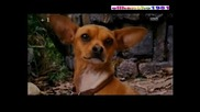 Бг Аудио Чихуахуа от Бевърли Хилс ( Beverly Hills Chihuahua ) Част 4 - 4