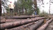 Истината за Българските гори част3