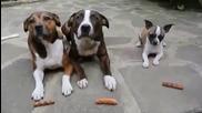 Три кучета очакват угощение с кебапчета