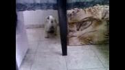 Видео - 0004.mp4великденското яйце на Сузи
