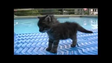 i am cute kitten