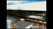 Котка си дреме на Линията - хич не се интересува от Разписанието на влаковете
