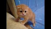 Много мило котенце..:)