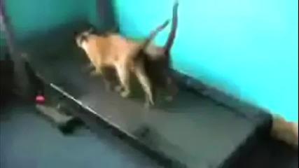 Компилация - Най - смешните котки които сте виждали