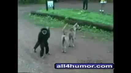 Още Забавни Животни