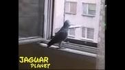 Papagal Jako govori izumitelno (na bylgarski)