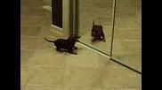 Куче Пощурява Пред Огледалото