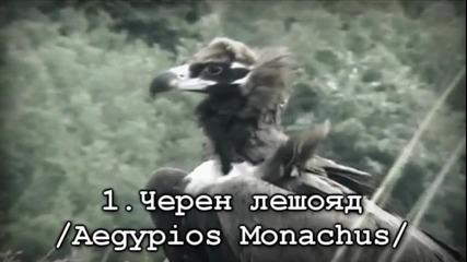 10 животни, изчезнали от картата на България
