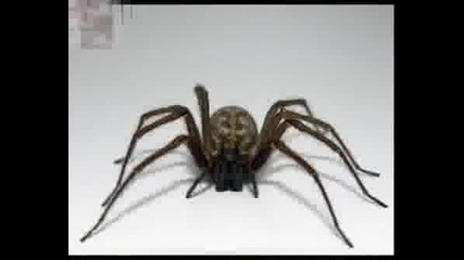 Fascinating Wildlife: Scorpions & Spiders