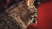 Котенце сладко мяука на песничка