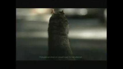 реклама на Bridgestone - крещяща катерица