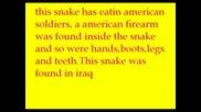 Най - Голямата Змия В Света