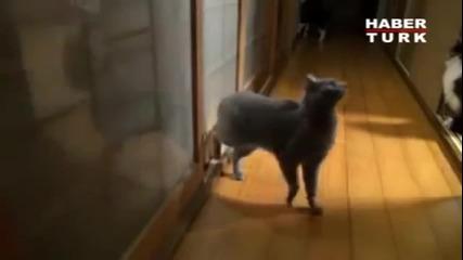 Котката, което разсмя цял свят