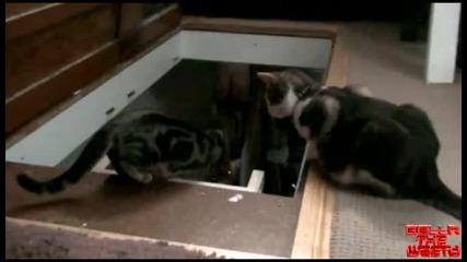 Котка Бута Друга Котка На Стълба