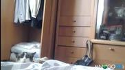 Коте шпионин