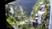 Страхотен аквариум - Ефект водопад !