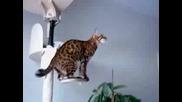 Смешна Котка Се Пребива