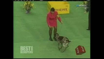 Куче се Насира на Изложение