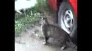 Котки Се Напъват