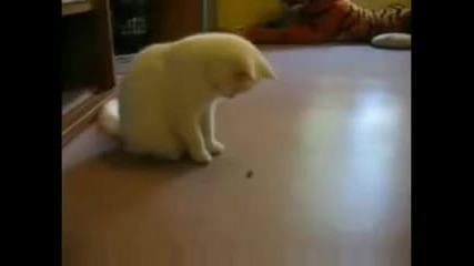 Двубой котка срещу муха!!!