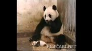 Panda Se Strqska