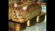 Много Смешни Картинки С Котки