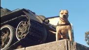 Страхотно куче - Happy Life of Parkour Dog Tret