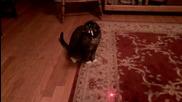 Да подлудиш котка с лазер