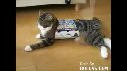 Голяма Котка В Малка Кутия!