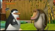 Пингвините От Мадагаскар Бг Аудио Цял епизод 14.11.2014 г.