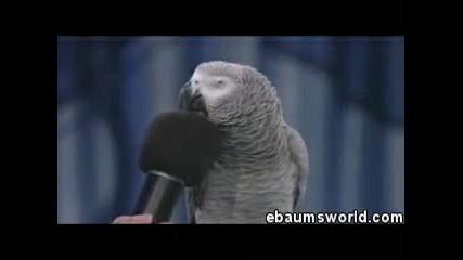 Гениалният папагал - Смях