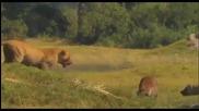 Последните Лъвове / The Last Lions (2011)