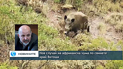 Нов случай на африканска чума по свинете в Югозападна България