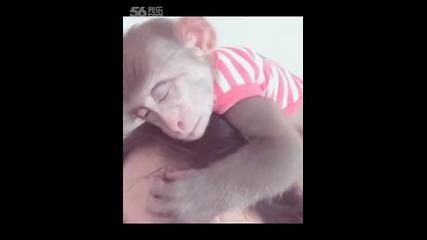 Палава маймуна