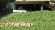 Нахални еноти отмъкват голям чувал с котешка храна !