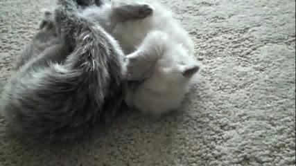 Kitten - so darn cute