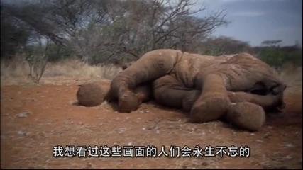 """Яо Минг представи """"Краят на дивото"""""""