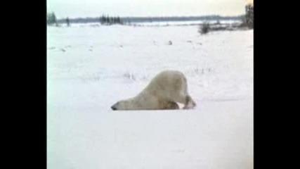 Мързеливата мечка (смях)