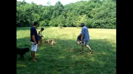 Обучение на Куче