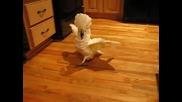 Папагал(качулато какаду) се ядосва на пода във кухнята и иска ласки от стопанина си