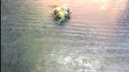 Ожесточена Борба за Живот или Смърт *паяк vs. Пчела*