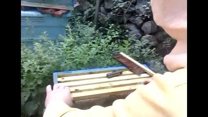 Вадене на мед